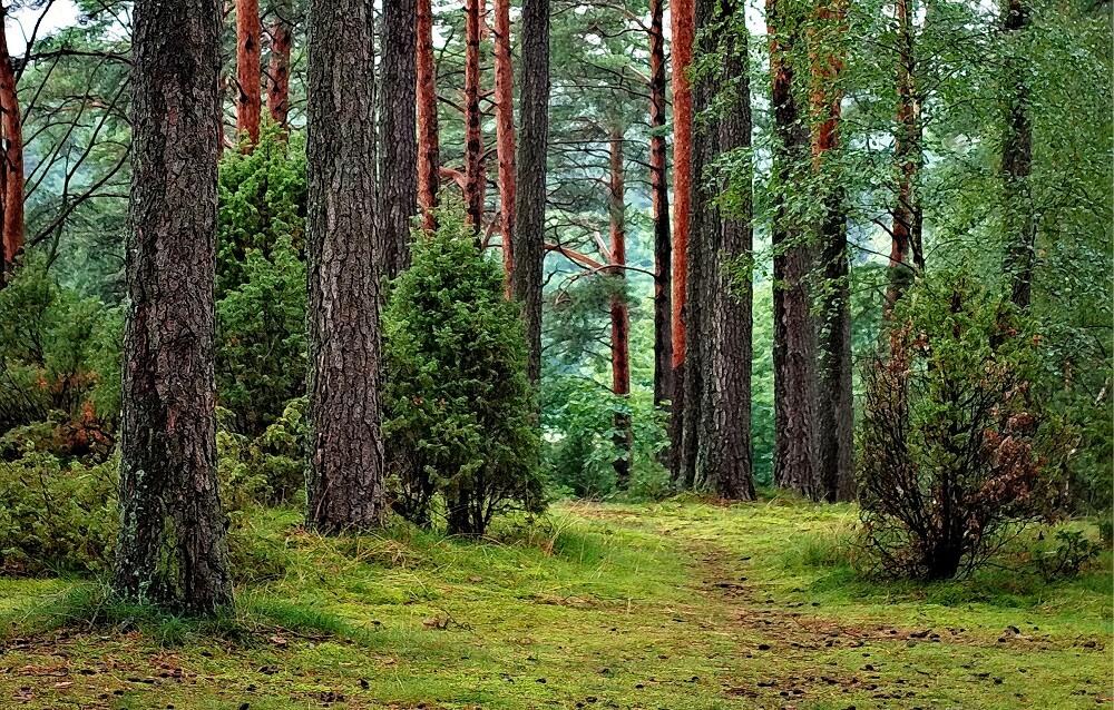 seks w lesie lub na polanie